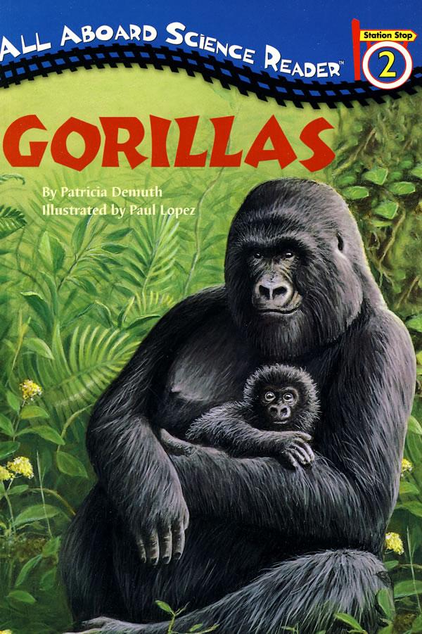 gorillas 大猩猩