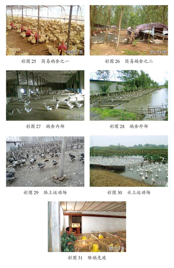 农村鹅舍设计方案