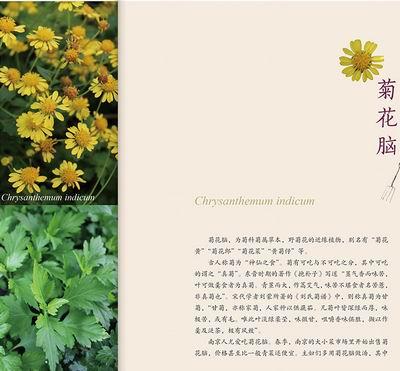木麻黄的香草盛宴