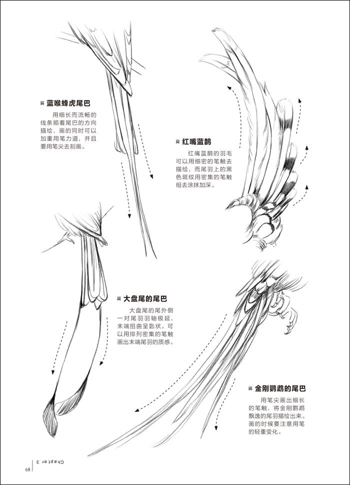 铅笔素描从入门到精通-动物篇 完备的素描基础书!