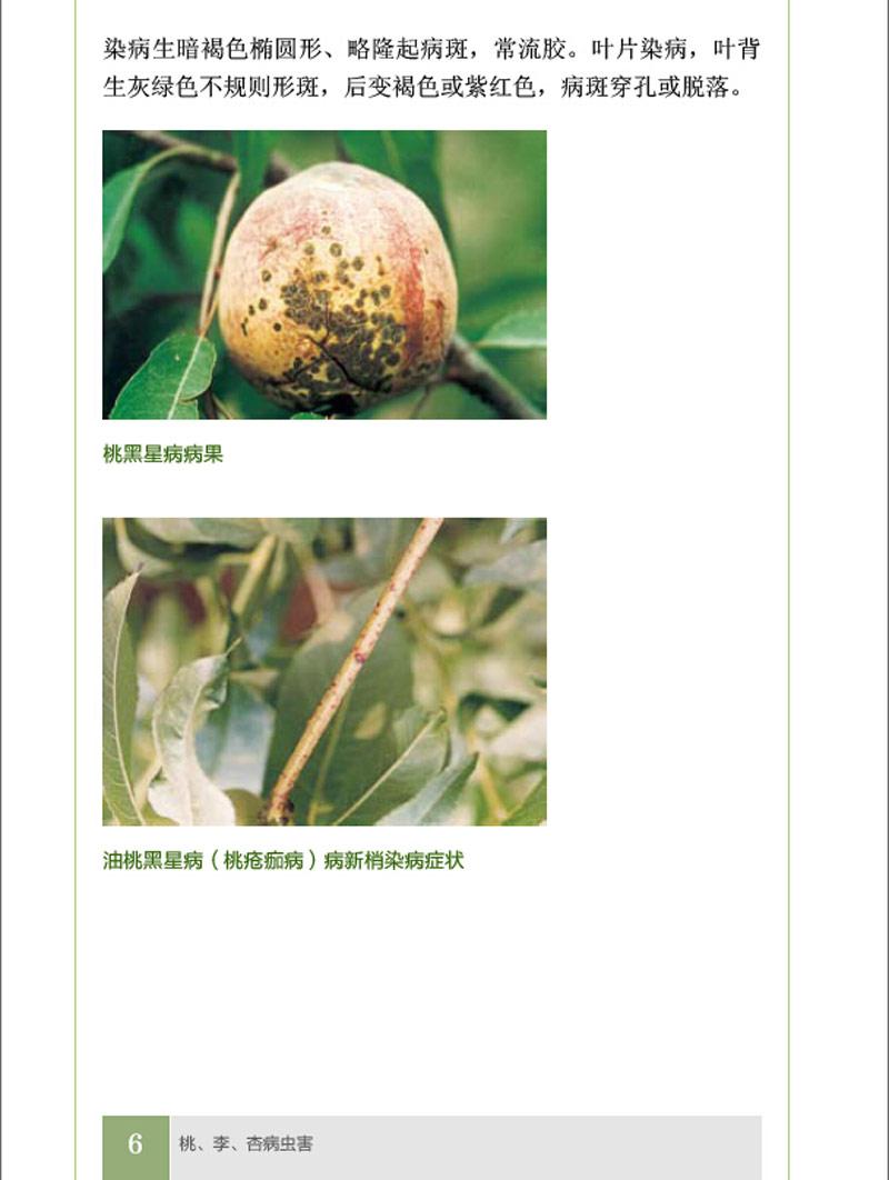 果树病虫害防治丛书--桃李杏梅病虫害防治原色图鉴 吕佩珂,苏慧兰