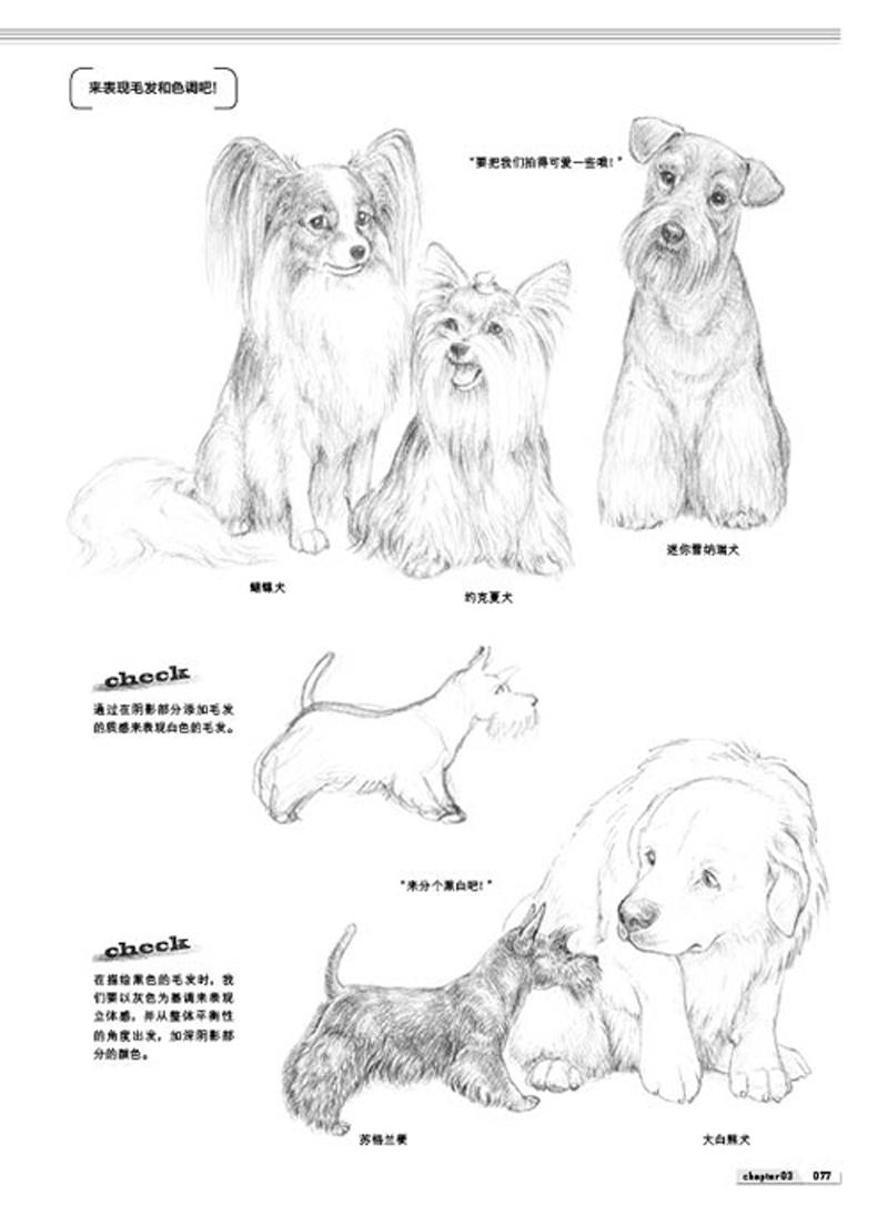 【th】动物铅笔素描基础入门 [日]铃木真理,丁莲 中国青年出版社