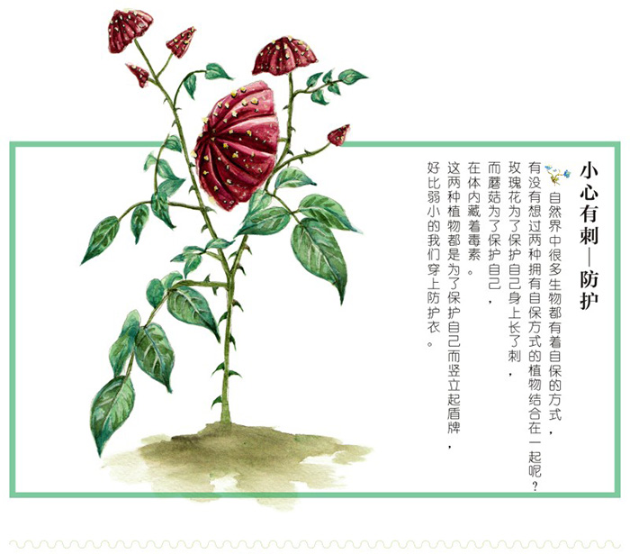 意植物手绘技法