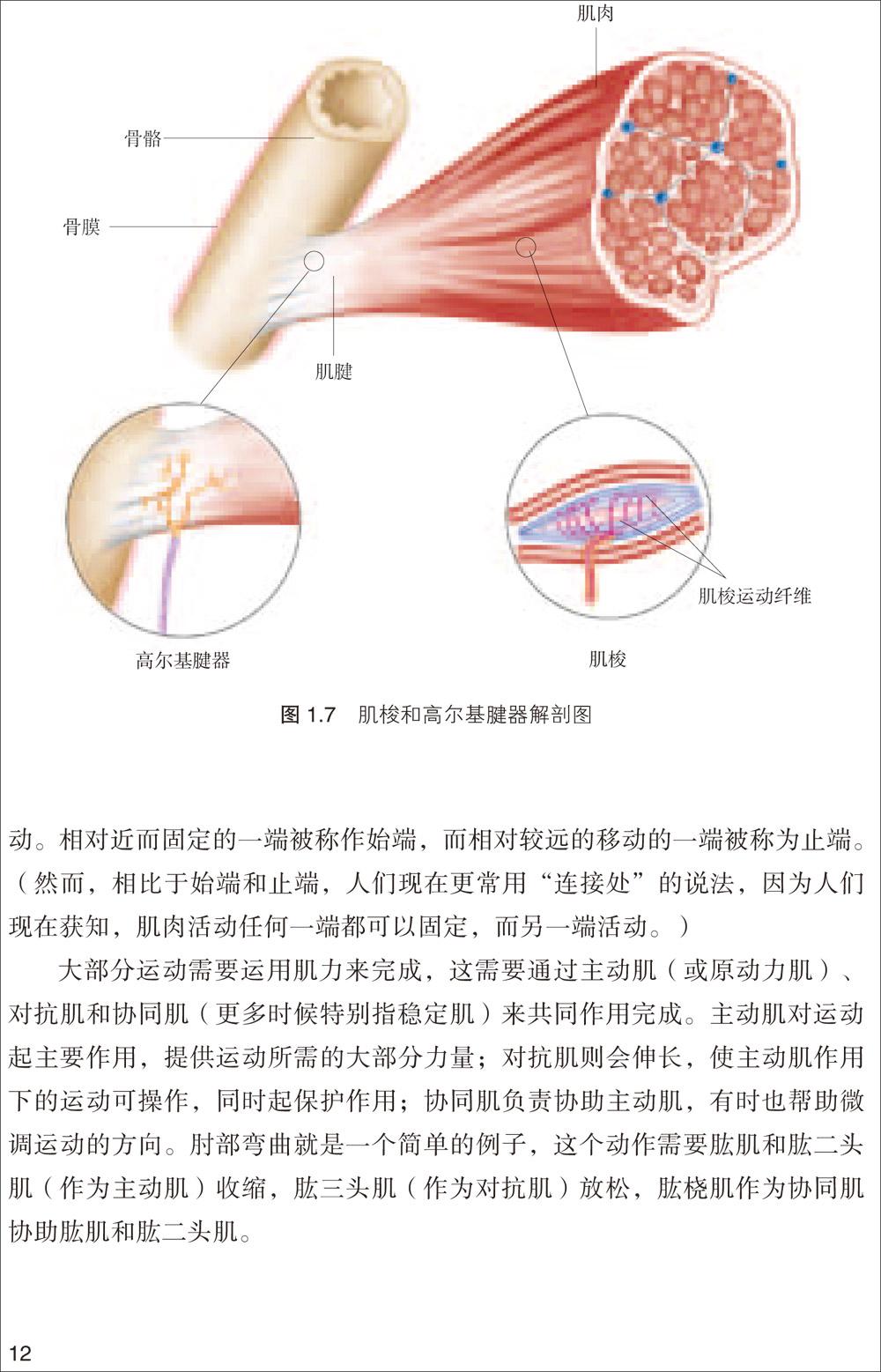颈部骨头解剖结构图解-足骨头解剖结构图