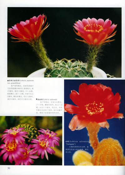花卉变形适合纹样步骤