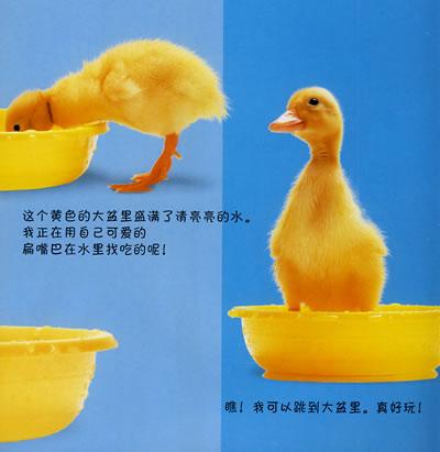 《看小动物成长3:小鸭子》(英国d.)【简介