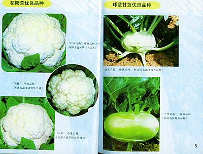 甘蓝类蔬菜周年生产技术/北方蔬菜周年生产技术丛书