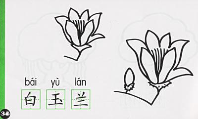 手绘大葱植物细胞结构图