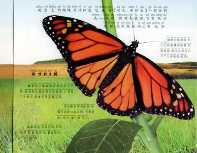 生命的开始:蝴蝶·瓢虫·苹果树(注音版)