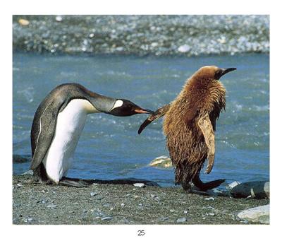 动物萌宝贝115册15种来自世界各地的动物宝宝从出生到