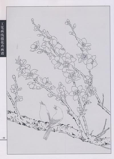 高清梅花花工笔画; 工笔画一般使用宣纸和绢; 工笔画线描花卉荷花