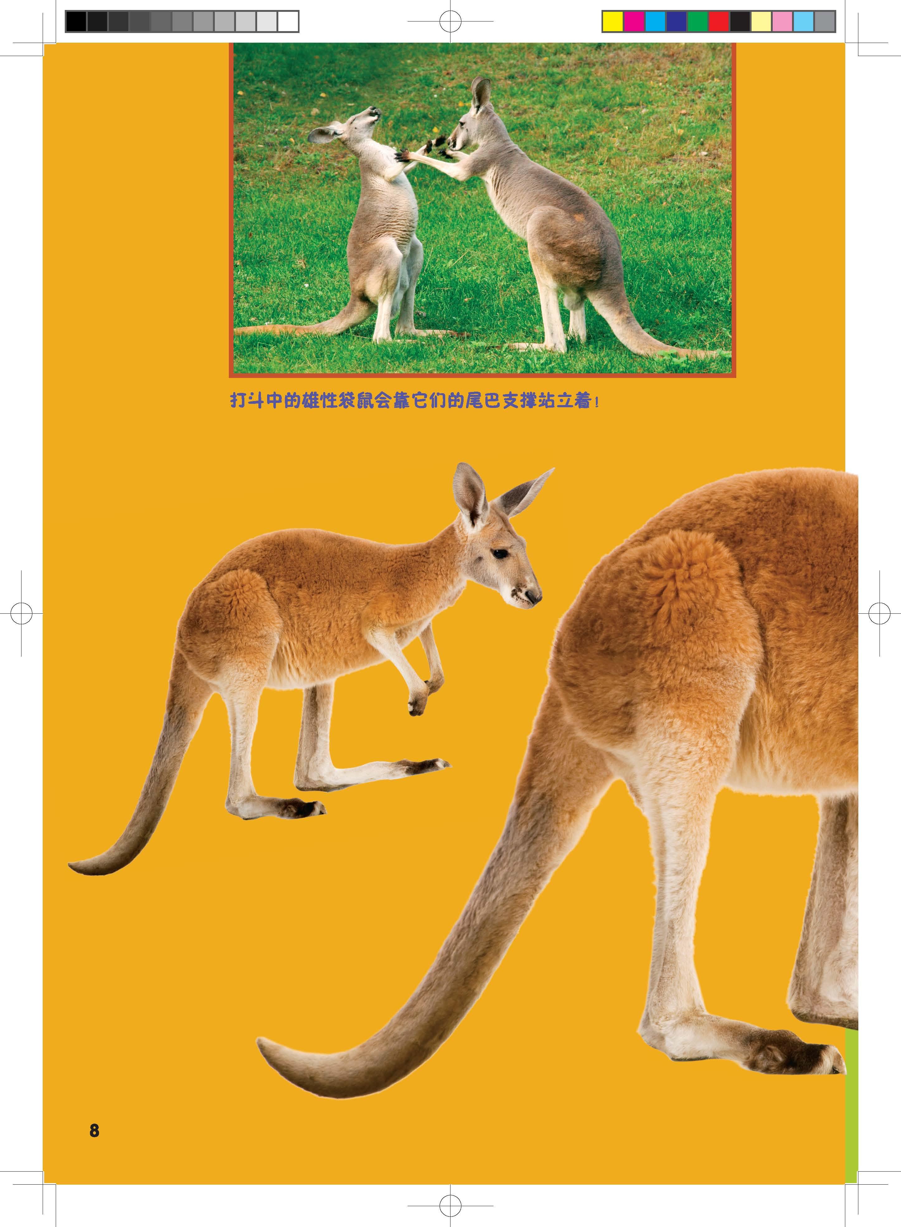 奇妙的动物——神奇的尾巴(以科学