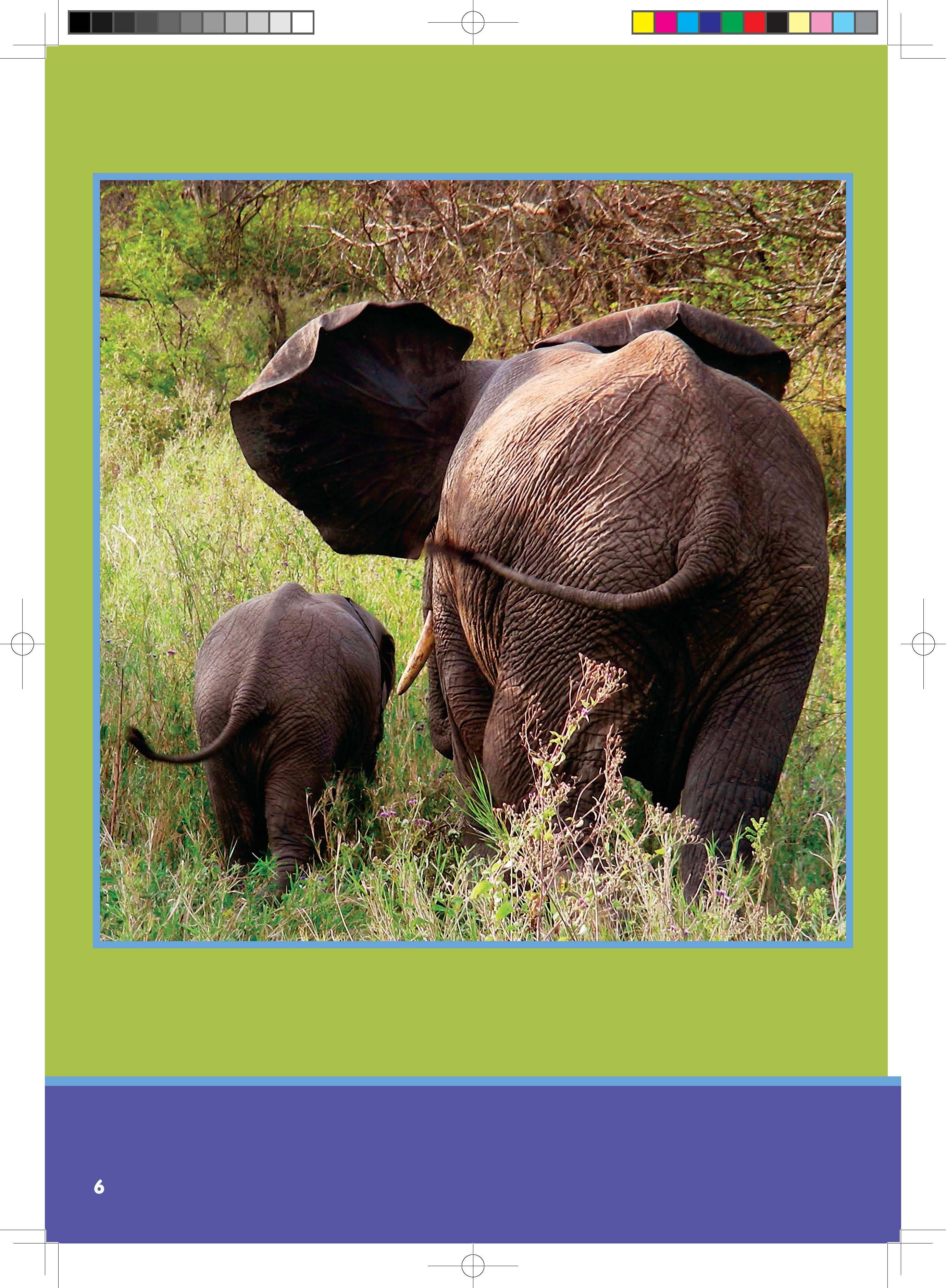 奇妙的动物——神奇的尾巴(以科学的视角帮助孩子了解动物,感知动物)