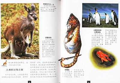 动物世界分册,书中以大量的图片,照片及详细的文字介绍了神奇的动物